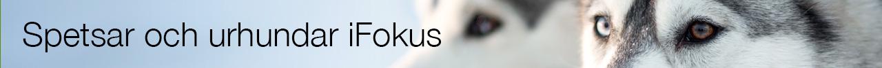 Reworking iFokus